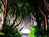 Drak forest thumbnail